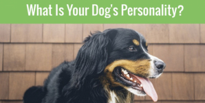 What Is Your Dog's Personality?